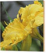 Daylilies Abound Wood Print
