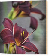 Daylilies Forever Wood Print