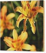 Daylillies0107 Wood Print