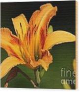 Daylillies0131 Wood Print