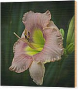 Daylily 5 Wood Print