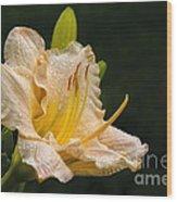 Daylily After A Morning Rain Wood Print