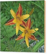 Frans Hall Daylily Attention Getter Wood Print
