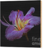 Daylily Bloom In The Dark Wood Print by ImagesAsArt Photos And Graphics