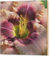 Daylily Collection # 14 Wood Print