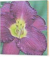 Daylily Collection #26 Wood Print
