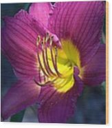 Daylily Wood Print by Edward Hamilton