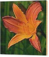 Daylily II Wood Print