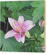 Daylily Wood Print