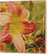 Daylily Memories Wood Print