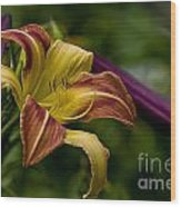 Daylily Picture 452 Wood Print