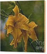 Daylily Picture 474 Wood Print
