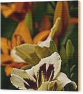 Daylily Picture 487 Wood Print
