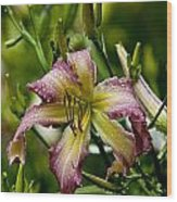Daylily Picture 494 Wood Print