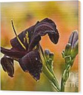 Daylily Picture 514 Wood Print