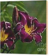 Daylily Picture 526 Wood Print