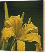 Daylily Picture 539 Wood Print