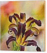 Daylily Picture 541 Wood Print