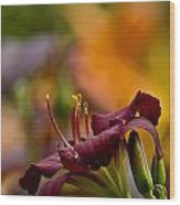 Daylily Pictures 571 Wood Print