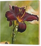 Daylily Pictures 576 Wood Print