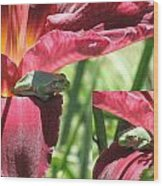 Daylily Shade For A Tree Frog Wood Print