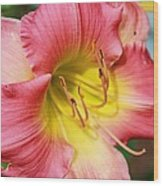 Daylily Wood Print by Victoria Sheldon