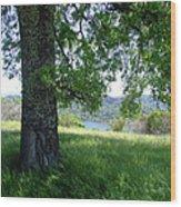 Days Of Summer Wood Print
