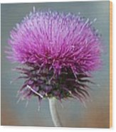 Dazzling Thistle Beauty Wood Print