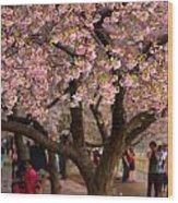 Dc Cherry Blossom Tree Wood Print
