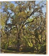 De Leon Springs - Classic Old Florida Wood Print