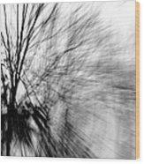 Dead Ash Wood Print