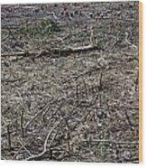 Dead Earth Wood Print