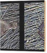 Dead Fish Lives 66b Wood Print