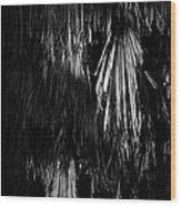Dead Fronds Wood Print