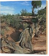 Dead Horse Point Tree 1 Wood Print