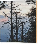 Dead Pines Along The Parkway Wood Print