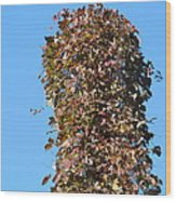 Dead Tall Stump Covered With New Leaves Wood Print