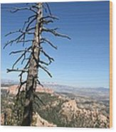 Dead Tree At Bryce Canyon  Overlook Wood Print