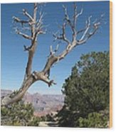 Dead Tree At Grand Canyon South Rim Wood Print