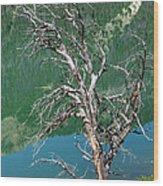 Dead Tree At Green River Lakes -wyoming Wood Print