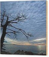 Dead Tree At Otter Cliffs Wood Print