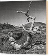 Dead Tree Craters Of The Moon Id Wood Print