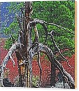 Dead Tree On Cinder At Sunset Crater Wood Print