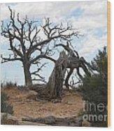 Dead Tree - Natural Bridges National Park Wood Print