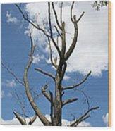 Dead Tree Wood Print