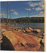 Dead Trees And Rocks Wood Print