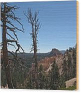 Dead Trees At Bryce Canyon Wood Print