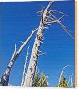 Dead White Trees Wood Print