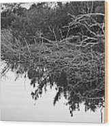 Deadfall Reflection In Black And White Wood Print