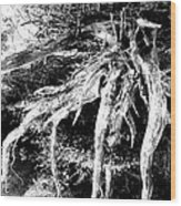 Deadtree Wood Print